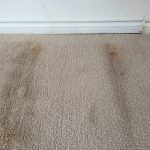 water damage shelton, water damage repair shelton